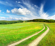 Road on the green meadow. Beautiful summer landscape