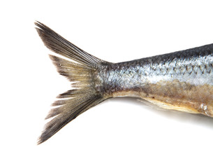 tail herring on white background