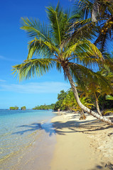 Leaning coconut tree on beach