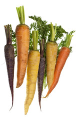 Fresh Colored Carrots