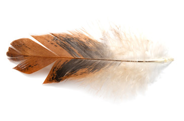 Single feather isolated on white background