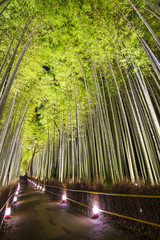 Bamboo Forest © SeanPavonePhoto