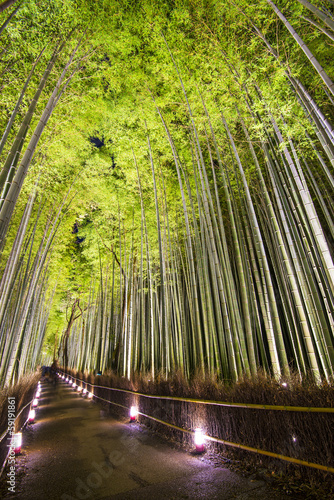 Foto op Canvas Bamboo Bamboo Forest
