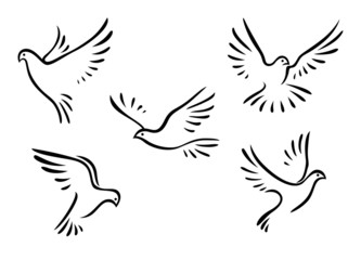 Doves and pigeons set