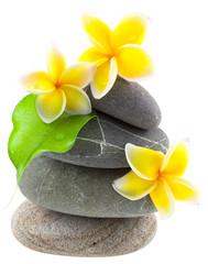 fleurs de frangipanier sur galets superposés