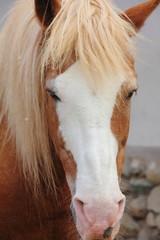 Horse. Head.