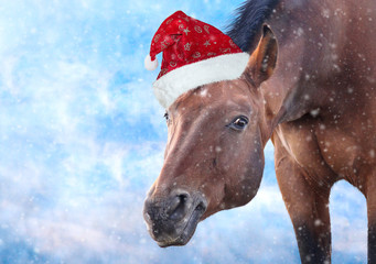 Red horse with Santa hat on frost background