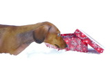 HD - Dog and Christmas gift_scene 02