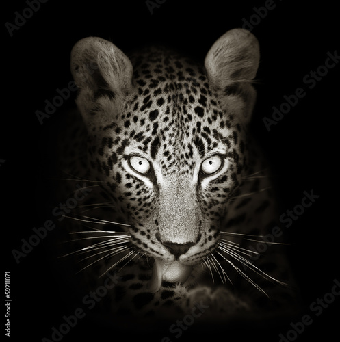 Foto op Canvas Luipaard Leopard portrait in toned b&w