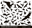 Birds vector silhouettes set. EPS 10