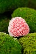 Frozen Raspberry on Green Moss Close-Up