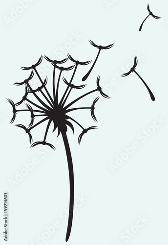 Dandelion on a wind isolated on blue background