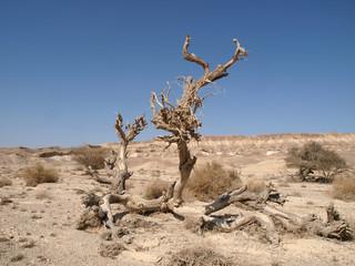 Arava Senke - Steppenlandschaft in Israel