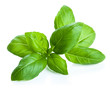 canvas print picture - basil leaves isolated