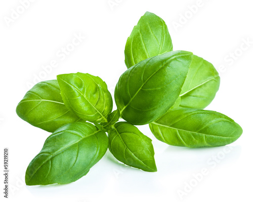 Foto op Canvas Kruiden basil leaves isolated