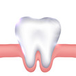 Healthy white tooth and gums illustration.