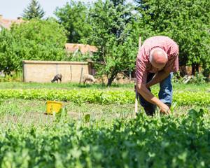Senior male working in the garden