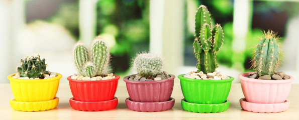 Cactuses in flowerpots, on wooden windowsill