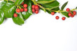 Christmas Border of holly on white