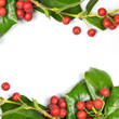 Christmas Border of holly on white background