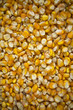 Corn seeds  background.