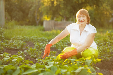 Mature woman working in  vegetable garden