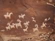 Постер, плакат: petroglyph USA Indians