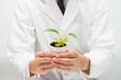 植物を手にしている研究者