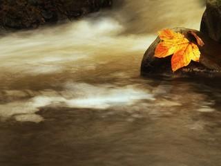 Colorful broken maple leaf on basalt stone in blurred water