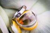 Silberne Eheringe mit Egelstein in einer Blume - 59241445