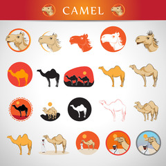 Camel Icons Set - Isolated On Gray Background - Vector