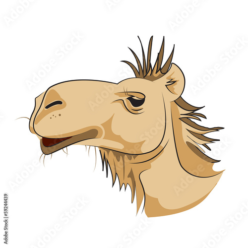 Camel - Isolated On White Background - Vector Illustration