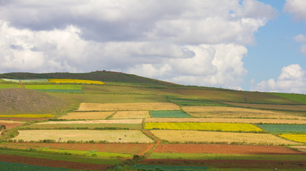 rural landscape with multicolored patches of fields