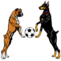 doberman and boxer