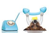 dog telephone