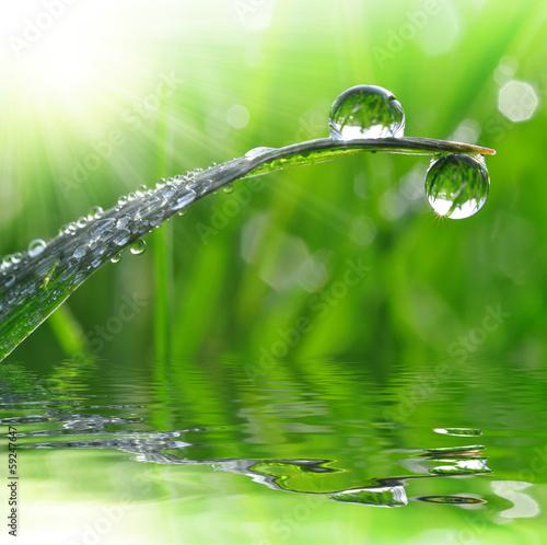 Panel Szklany dew drops close up