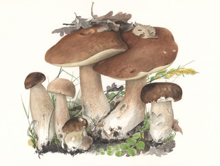 Hand-painted Mushrooms Boletus edulis