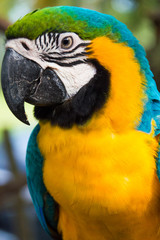 Big macaw colour is bright
