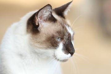 Katze - Portrait