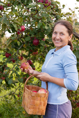 woman in apple garden