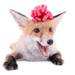 red fox Christmas