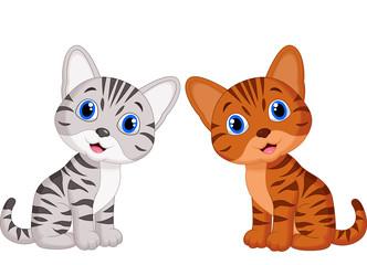 Cute baby cat cartoon