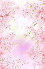 黄昏どきの桜