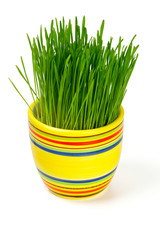 green grass in colorful flowerpot