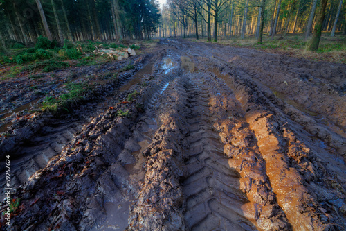 Tire tracks in a muddy path through a forest