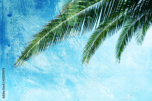 palm texture backdrop