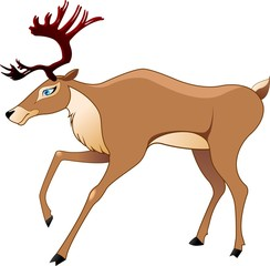 The deer in a vector