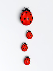 Ladybirds in a vertical row