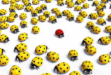 Red ladybird is marginalized