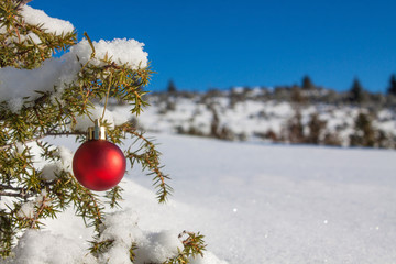 Christmas decoration red ball in nature landscape